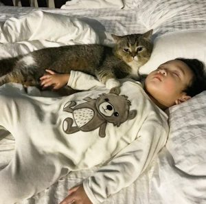 4 Kucing Popular Di Media Sosial Kalah Selebriti Media Hiburan